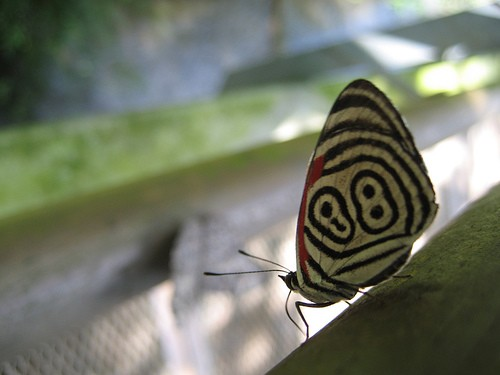 mariposa de iguazu by reflectification