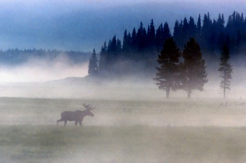 yellowstone by steve took it
